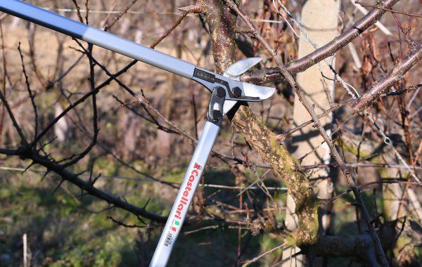 M 80 – Էտիչ (ծառերի)